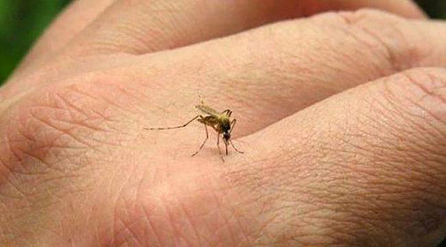 Cómo prevenir el Dengue y qué hacer en caso de síntomas en Ituzaingó