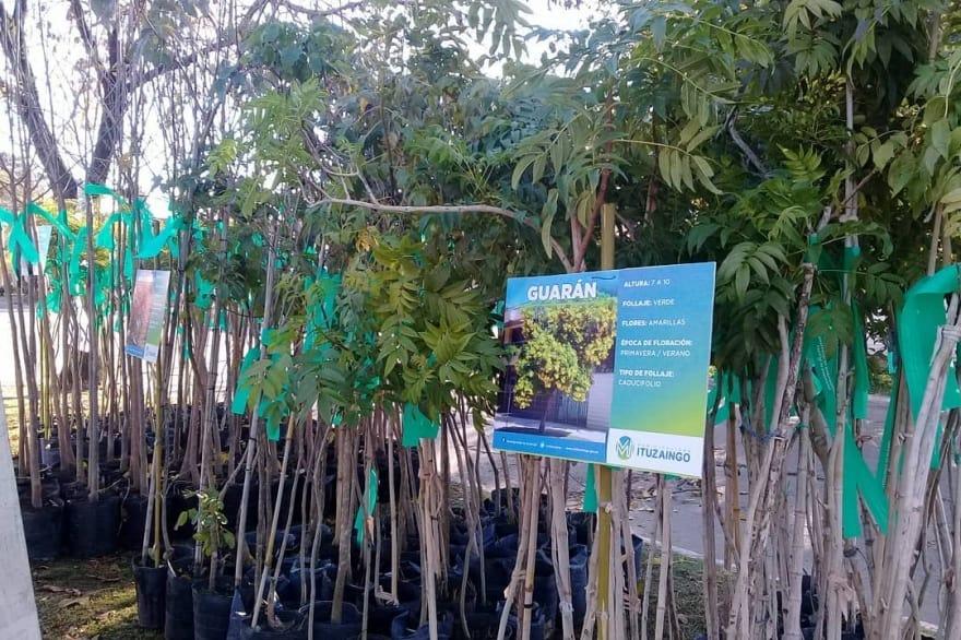 Ituzaingó: entregarán un árbol a cambio de residuos reciclables