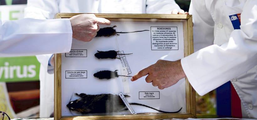 La OMS se pronunció sobre brote de hantavirus en Argentina