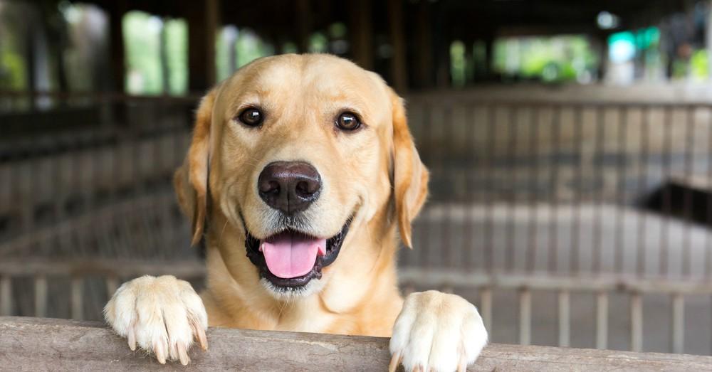 Un intendente de Santa Fe exime de los impuestos municipales a quienes adopten mascotas abandonadas