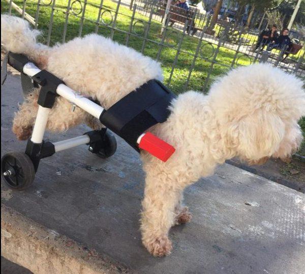 Joven hace sillas de ruedas para perros con impresión 3D y las regala