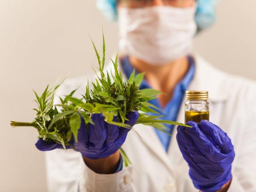 Se suman más municipios: Berazategui aprobó el uso del cannabis medicinal