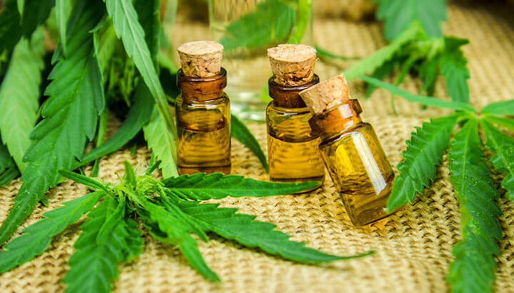 Abierto al público: Taller sobre el cannabis medicinal en el INTA